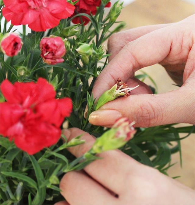 花鉢のお手入れ処方箋「トラブル対処法とケア方法」