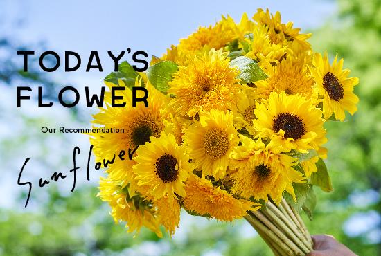 TODAY'S FLOWER Peony